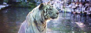 Chauffeur Privé Vtc Zoo de Beauval